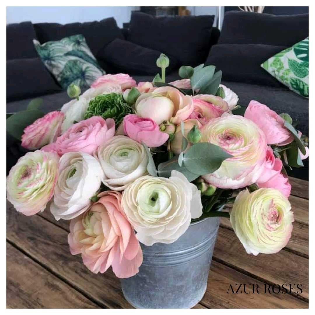 Azur Roses producteur renoncules var toulon